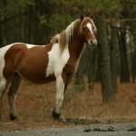 poneyの評価、評判、安全性、危険性、攻略