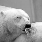 トラフィックエクスチェンジ(白熊)の評価、評判、副収入への稼ぎ方